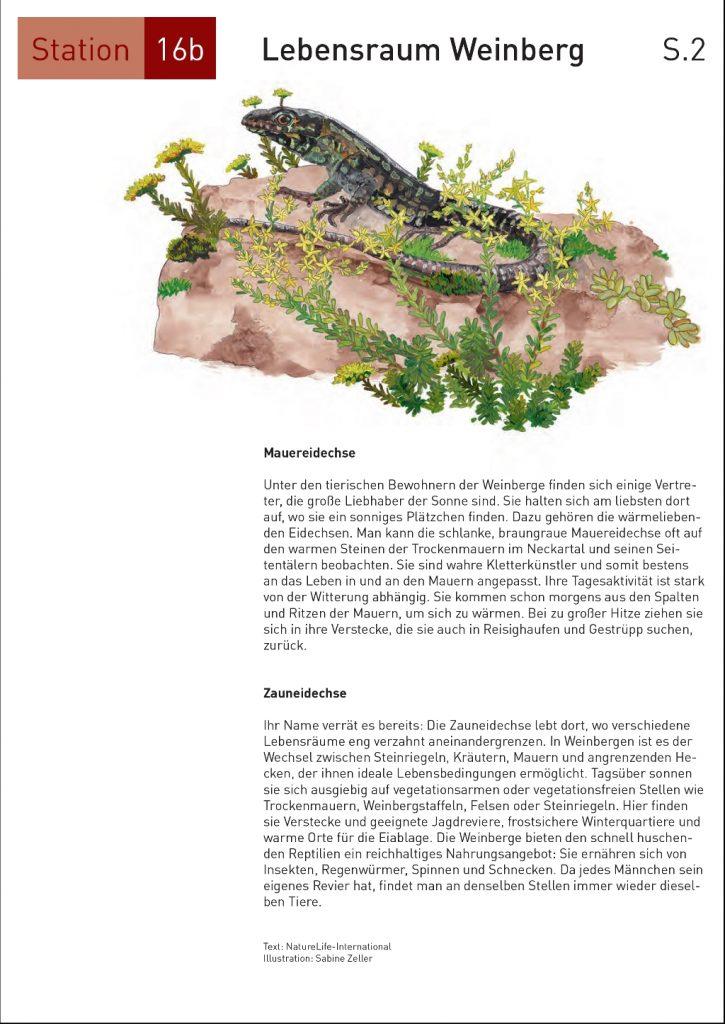 Seite16_2