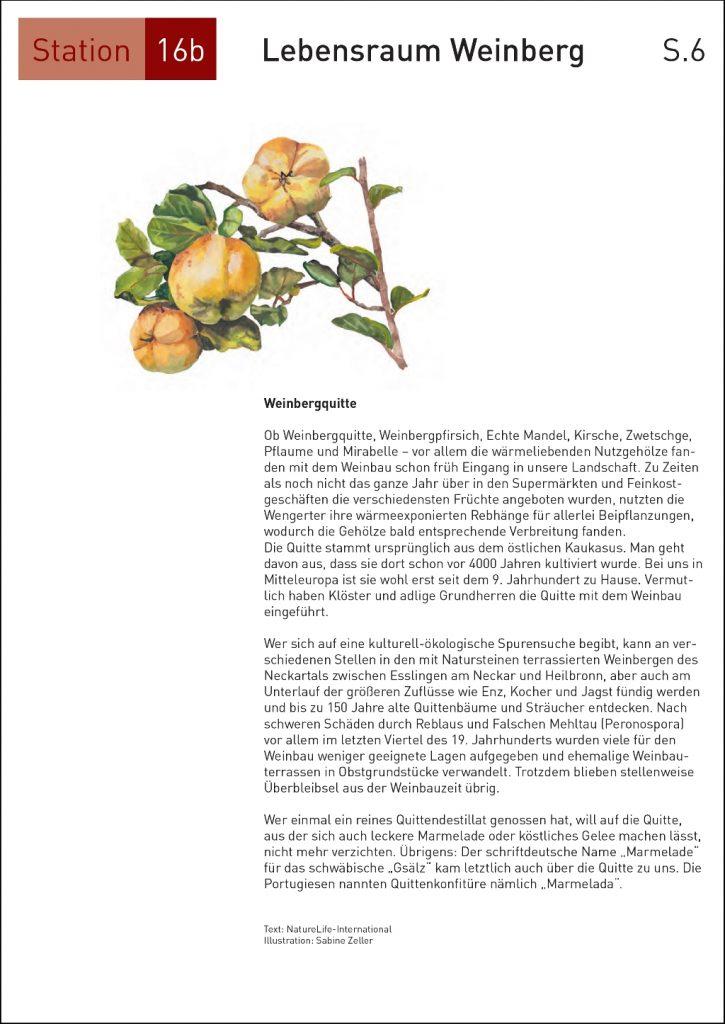 Seite16_6