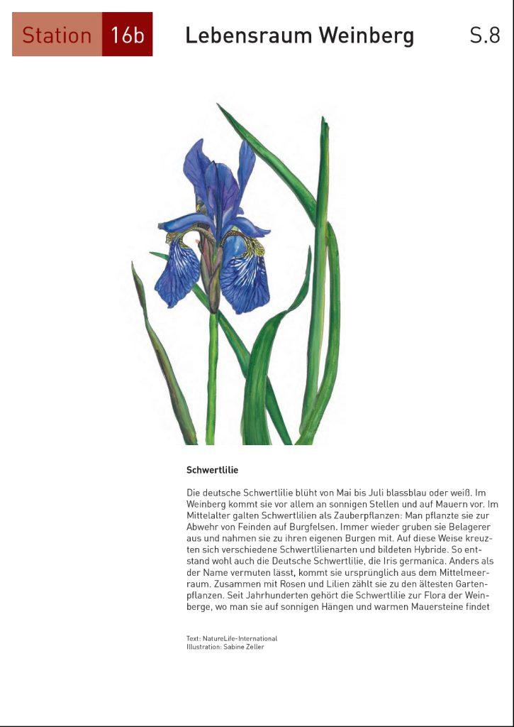 Seite16_8
