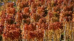 Herbst006
