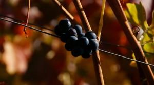 Herbst007