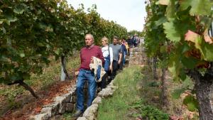 Weinkultur 4