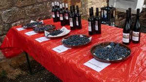 Weinkultur 5