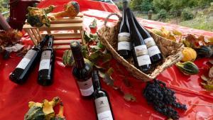 Weinkultur 6